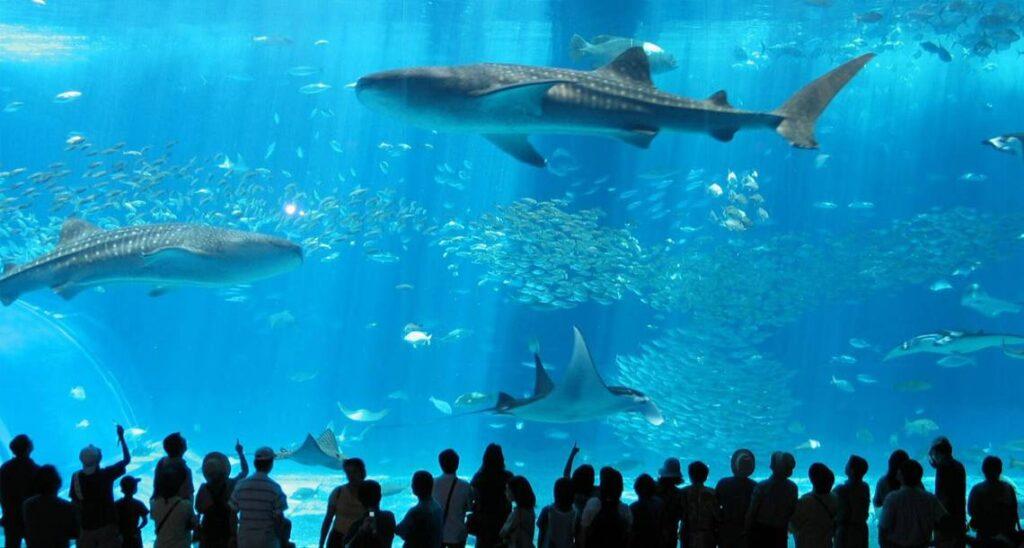 aquarios gigantes Destaque