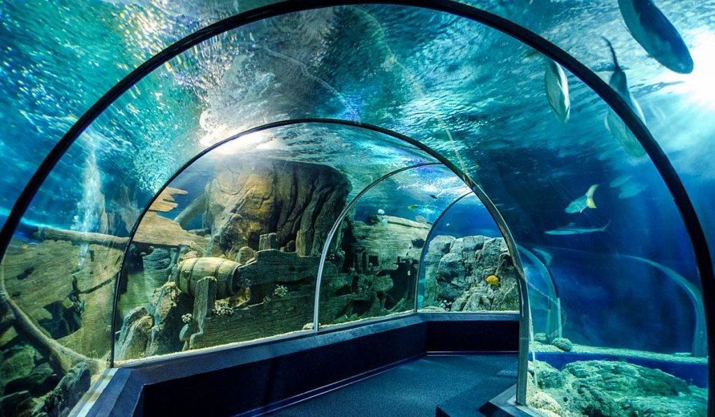 sochi aquario
