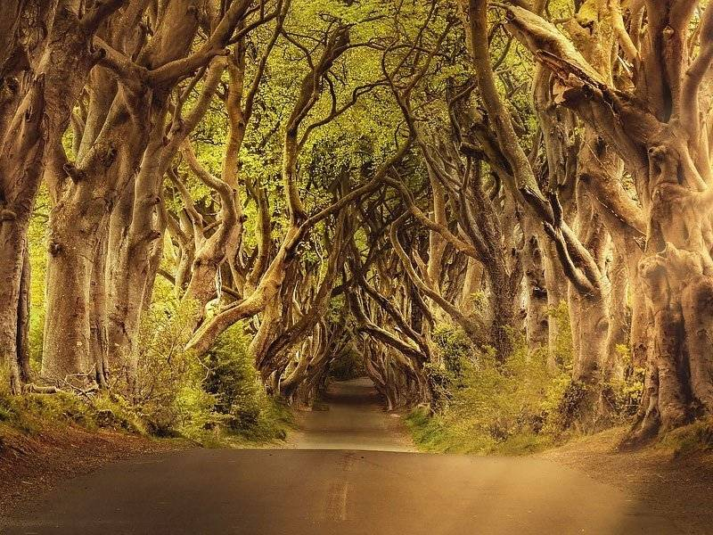 dark-hedges 7 lugares incríveis que inspiraram o mundo de Game of Thrones