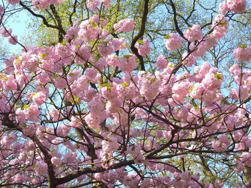 viagem para a holanda na primavera