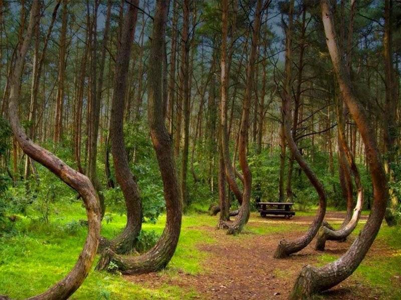 crooked_forest