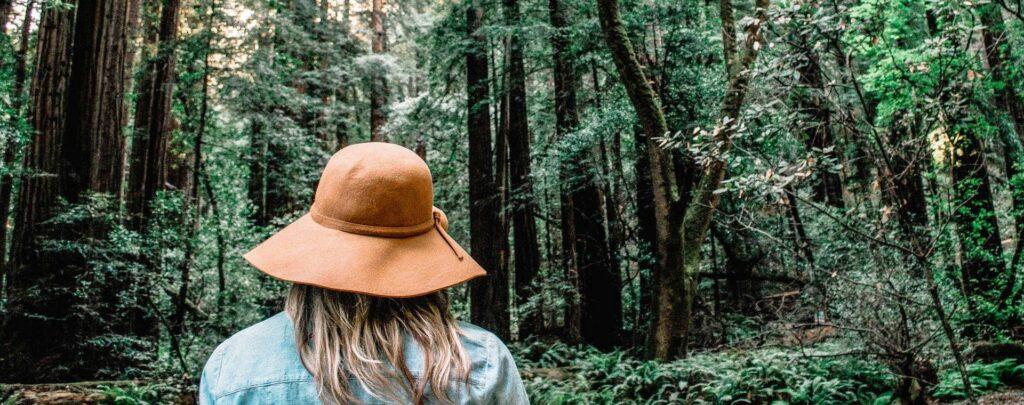 topo_florestas1