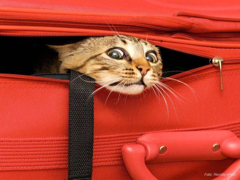 antes de viajar com seu animal procure saber quais são as exigências atuais do país de destino