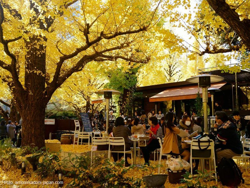 Avenida Ginkgo em Tóquio