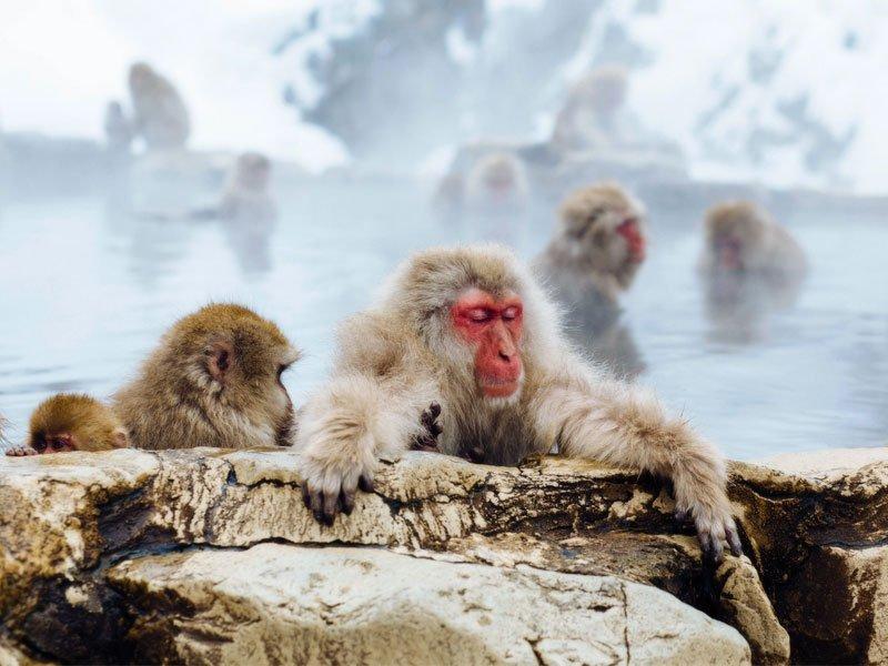 Parque dos Macacos de Jigokudani, localizado a oeste de Tóquio.