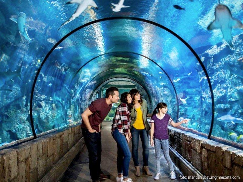 shark-tank-aquarium